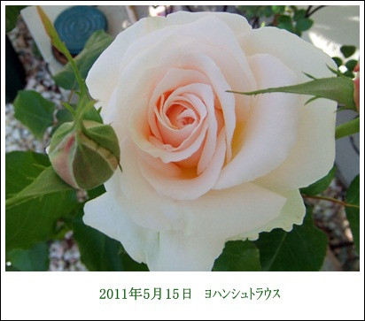 d0081541_2275249.jpg