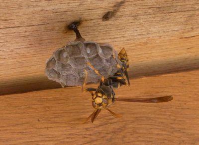 蜜蜂より先に天敵出現_c0063348_8372539.jpg