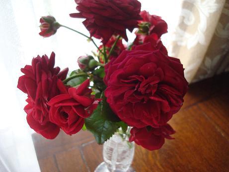 赤い薔薇_d0006467_2343520.jpg