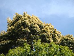黄金色の新緑_e0175370_23352725.jpg