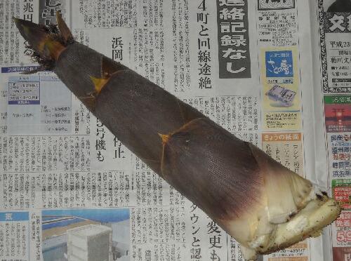 竹の子掘り~_f0018078_1722925.jpg