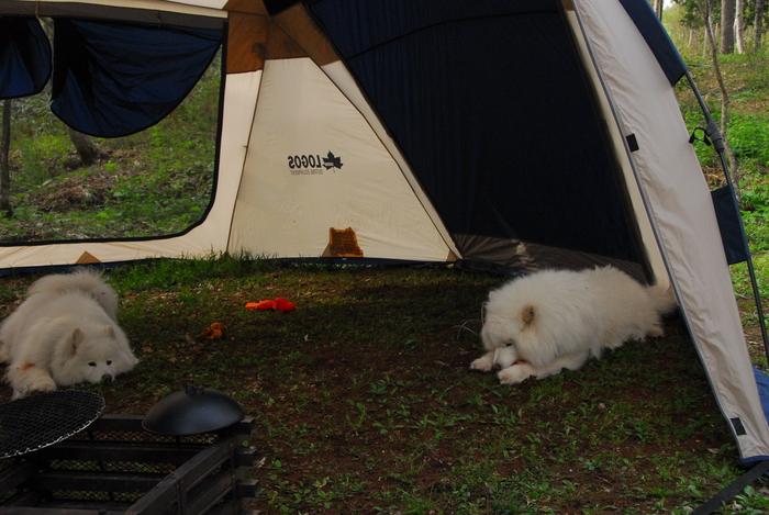 夏サモキャンプの下見 2_a0049296_1916868.jpg