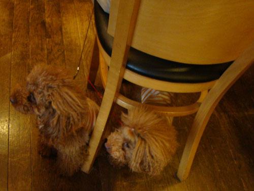 犬喫茶_a0047200_2043797.jpg