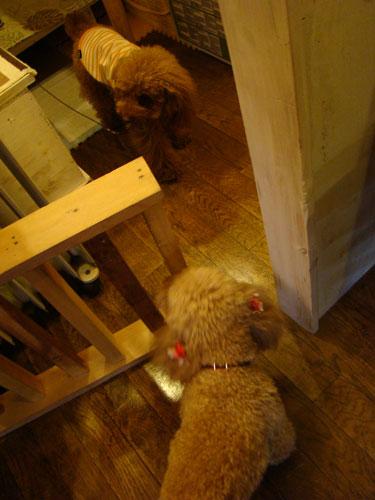 犬喫茶_a0047200_2044518.jpg
