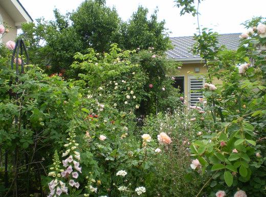 たおやかに輝くバラ庭!_f0139333_0143657.jpg
