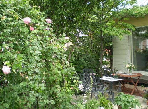 たおやかに輝くバラ庭!_f0139333_111634.jpg