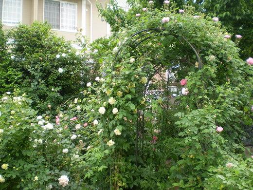たおやかに輝くバラ庭!_f0139333_135085.jpg