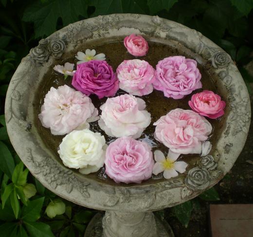 たおやかに輝くバラ庭!_f0139333_152094.jpg