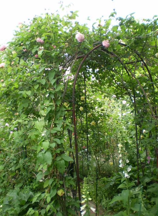 たおやかに輝くバラ庭!_f0139333_18433867.jpg