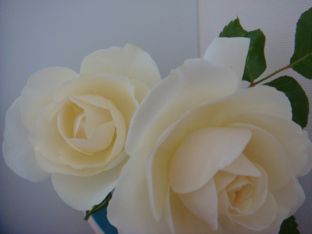 バラの香り_a0186034_8411147.jpg
