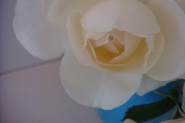 バラの香り_a0186034_8432118.jpg