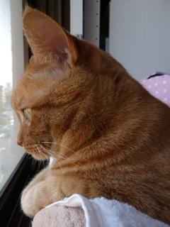 ケーブルクリップ猫 しぇる編。_a0143140_21413256.jpg