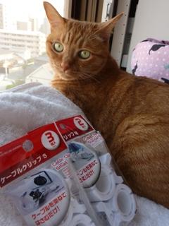 ケーブルクリップ猫 しぇる編。_a0143140_21513750.jpg