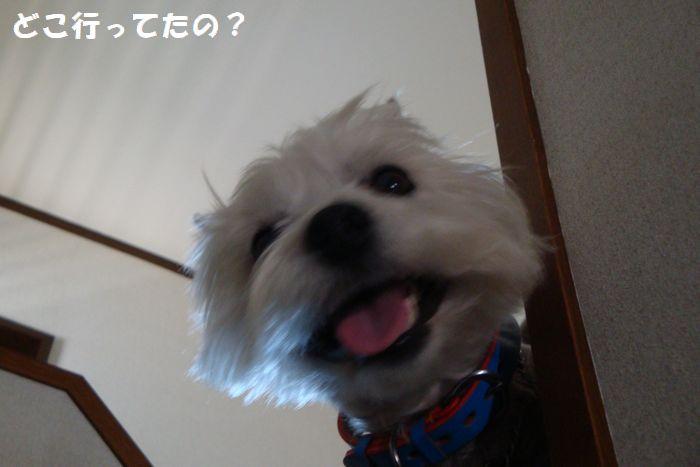 b0214647_123884.jpg