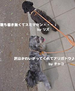 Ms.kinako_f0170352_19125316.jpg
