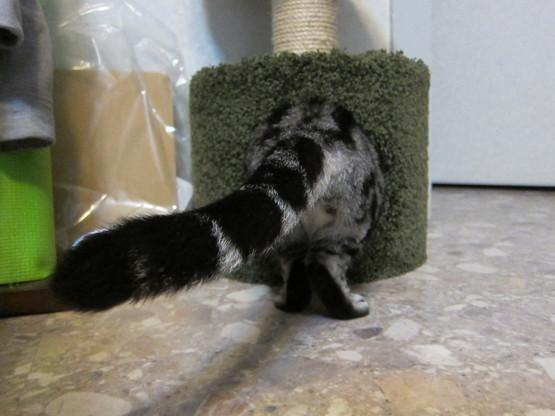 cat tower._c0153966_16454811.jpg