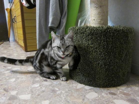 cat tower._c0153966_16465388.jpg
