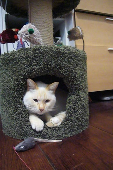 cat tower._c0153966_16505732.jpg