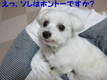 b0193480_15401889.jpg