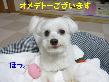 b0193480_15463330.jpg