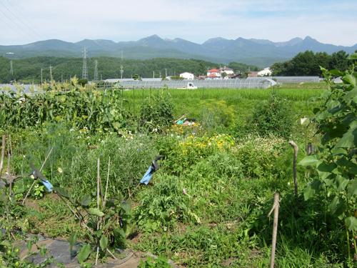 ある日の畑の風景_a0204089_58285.jpg