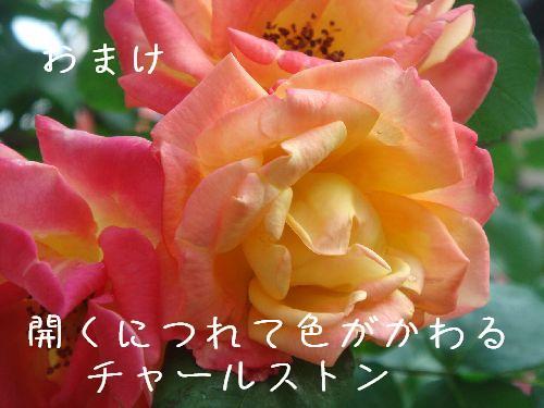 b0101991_710342.jpg