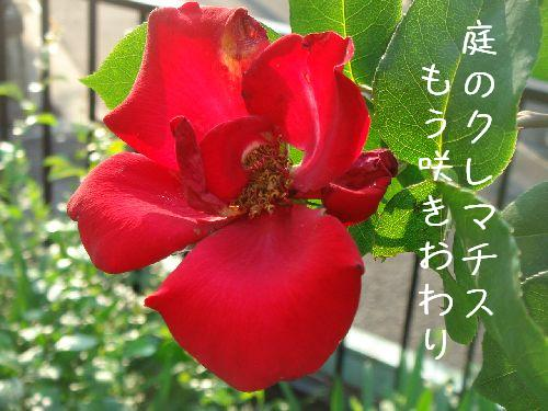b0101991_794575.jpg