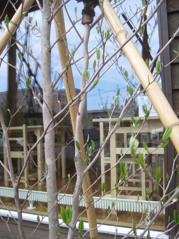 八重桜が開花・・・_f0202703_1143185.jpg