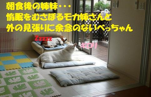 f0121712_1524375.jpg