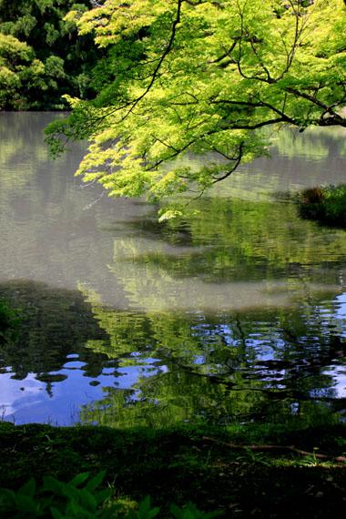 花を求めて 植物園_e0048413_2121456.jpg