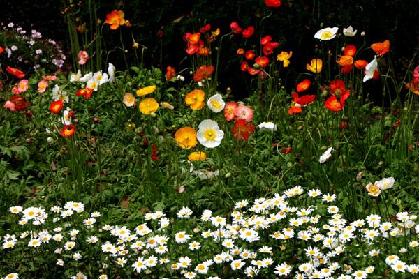 花を求めて 植物園_e0048413_2122822.jpg