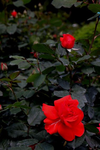 花を求めて 植物園_e0048413_212372.jpg