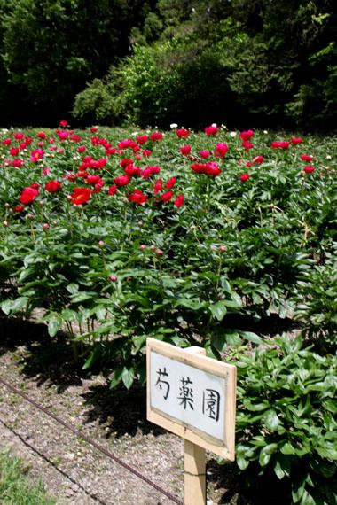 花を求めて 植物園_e0048413_213057.jpg