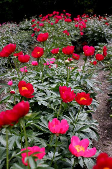花を求めて 植物園_e0048413_2131216.jpg