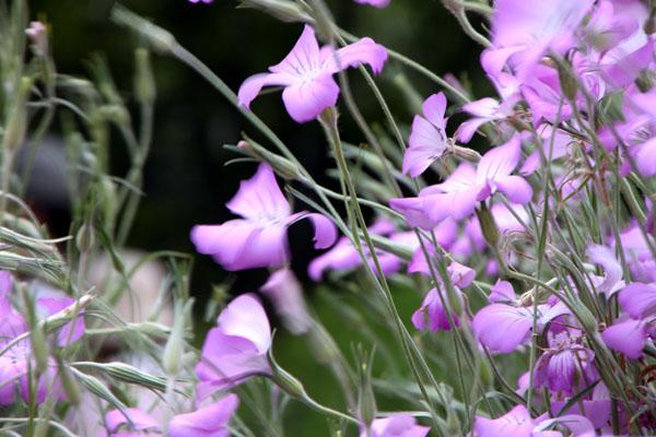 花を求めて 植物園_e0048413_2132553.jpg