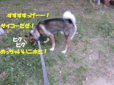 f0143123_20131430.jpg