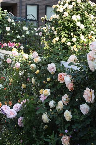 憧れの庭?_e0110038_21503873.jpg