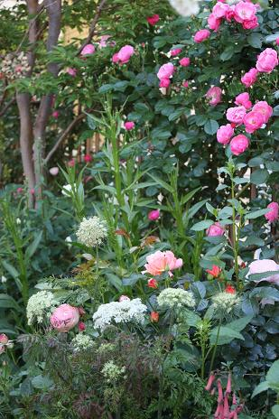 憧れの庭?_e0110038_21505118.jpg
