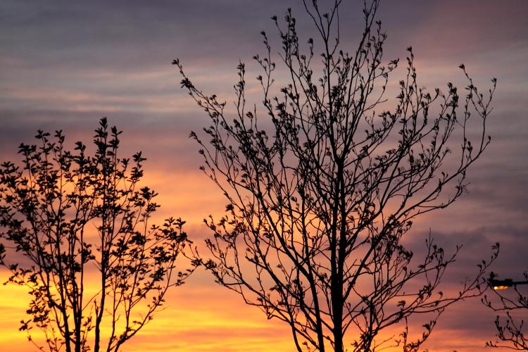 きのうの夕焼け 5月19日_f0113639_17454974.jpg