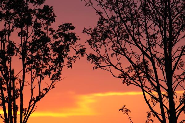 きのうの夕焼け 5月19日_f0113639_1745957.jpg