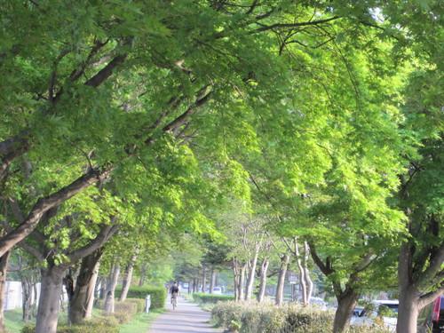 萌黄色に染まる軽井沢_f0236260_23444626.jpg