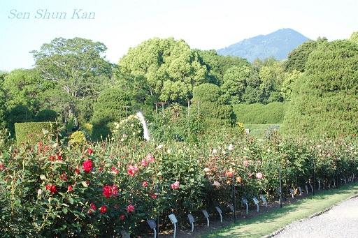 京都府立植物園のバラ (2011年5月)_a0164068_104455.jpg