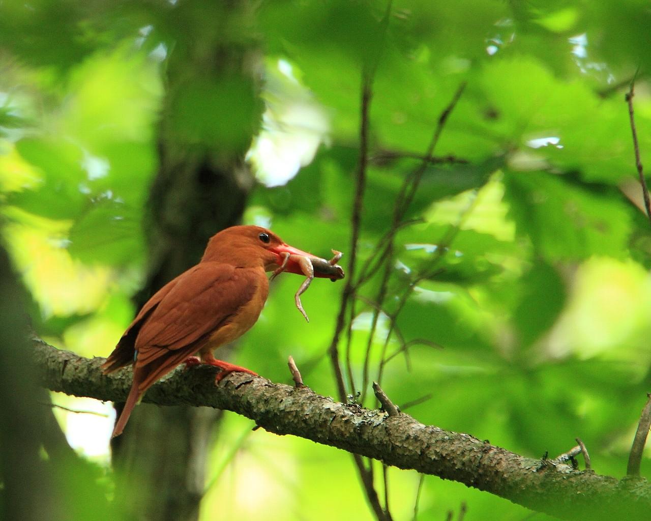 本日は赤い鳥_f0105570_214329100.jpg