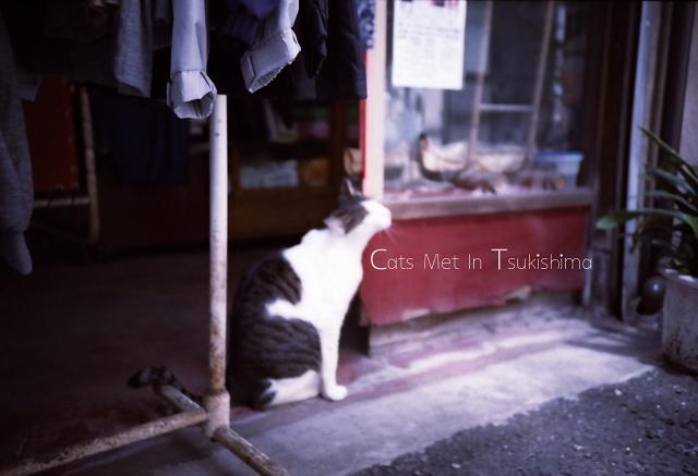月島・佃島で出会った猫たち_f0115475_2158157.jpg