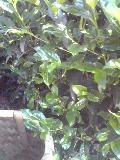 f0047884_22593635.jpg
