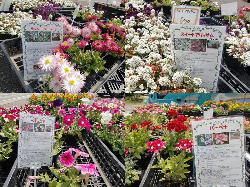 お花屋さん!!_b0219993_14575859.jpg