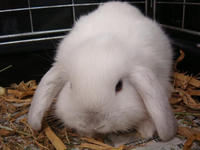 ウサギ・ハムスター_f0189122_1452499.jpg