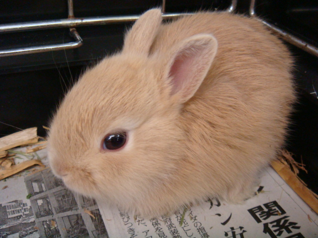 ウサギ・ハムスター_f0189122_1455839.jpg