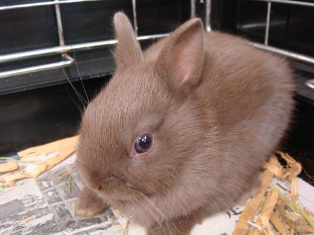 ウサギ・ハムスター_f0189122_147365.jpg