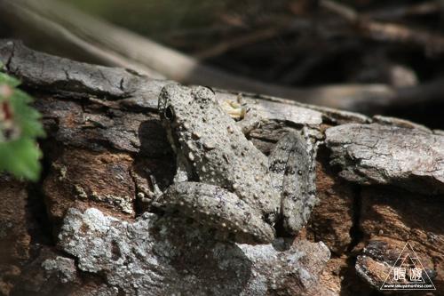 104 Chalk Ridge Falls Park ~テキサス上陸~_c0211532_23325115.jpg